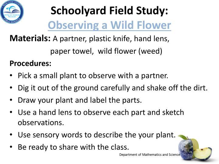 Schoolyard field study observing a wild flower