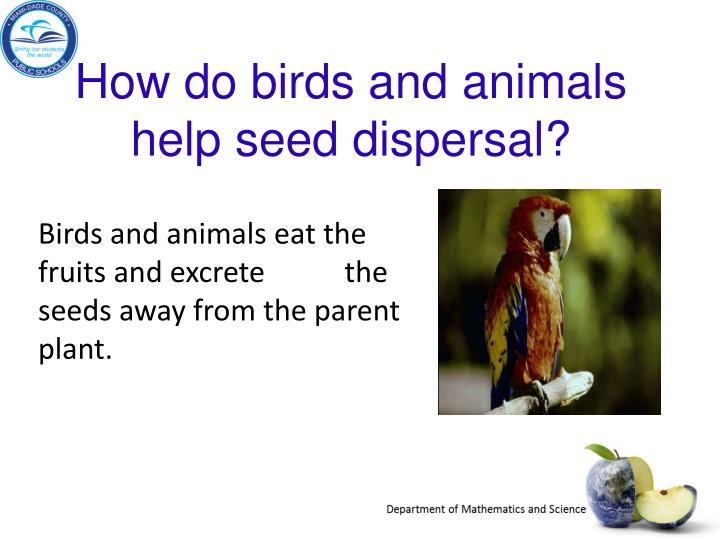 How do birds and animals help seed dispersal?