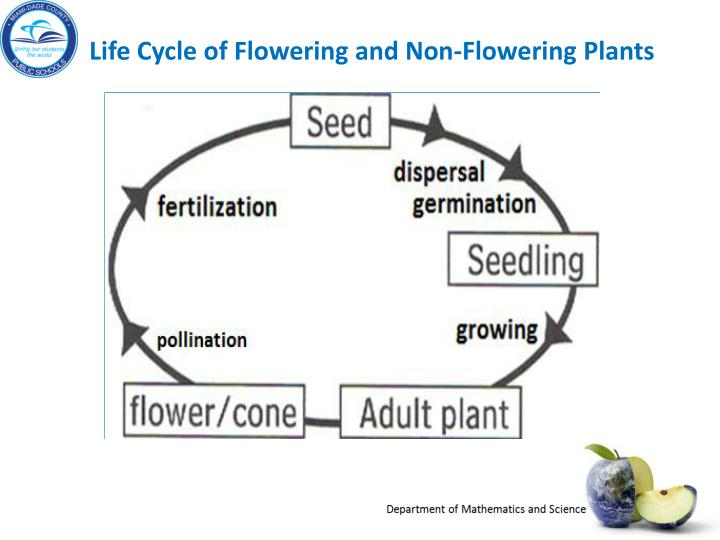 Life Cycle of Flowering and Non-Flowering Plants