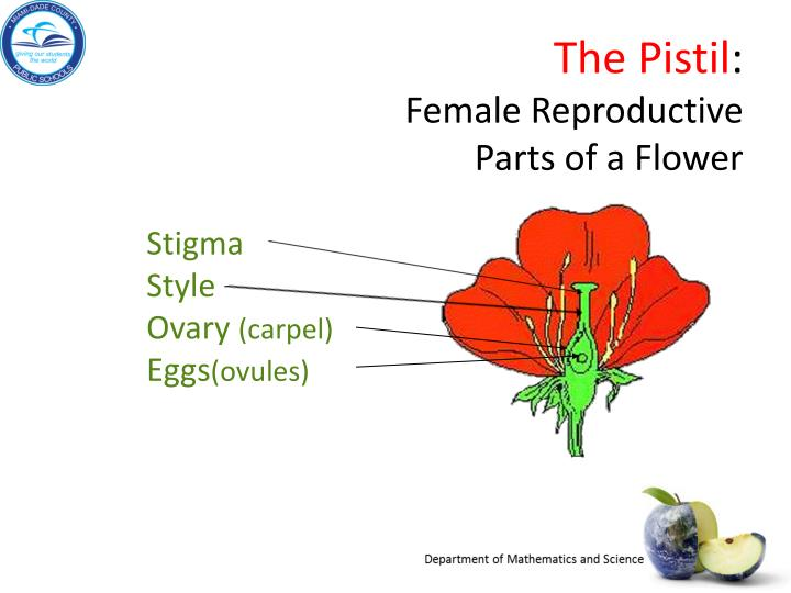 The Pistil