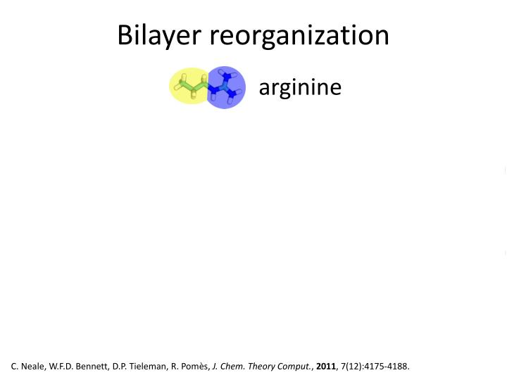 Bilayer