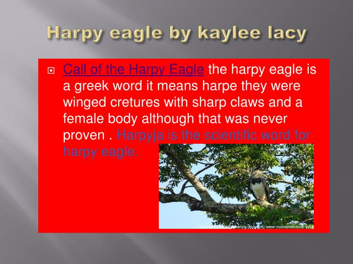 Harpy eagle by kaylee lacy