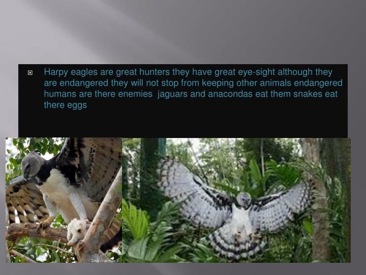 Harpy eagles are great hunters they have great eye-sight although they are endangered they will not stop from keeping other animals endangered humans are there enemies  jaguars and anacondas eat them snakes eat there eggs