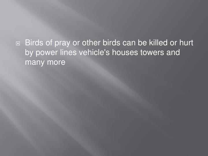 Birds of pray or other birds can be killed or hurt by power lines vehicle's houses towers and many more