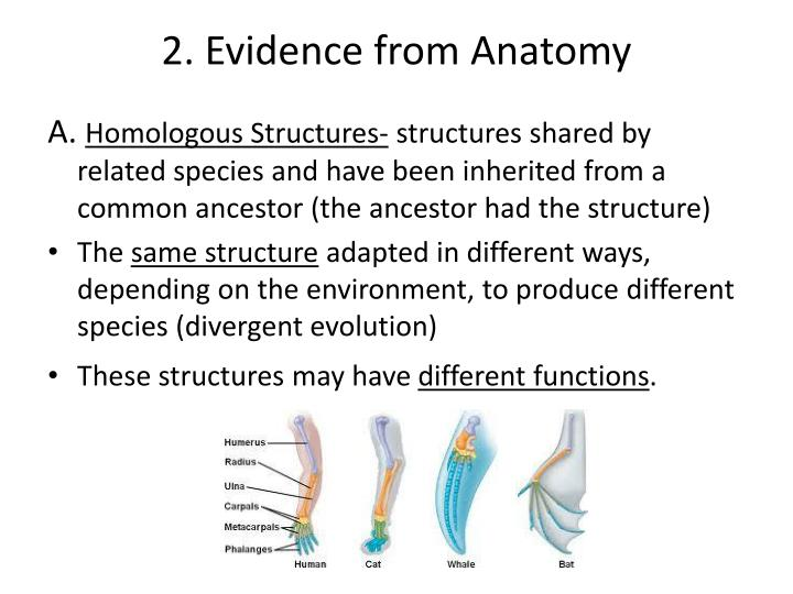 """PPT - Evidence of Evolution- """"Descent with Modification"""" PowerPoint ..."""
