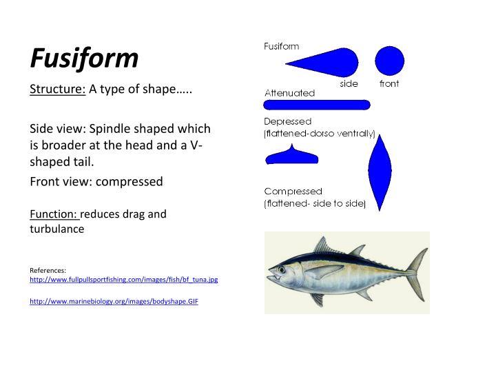 Fusiform