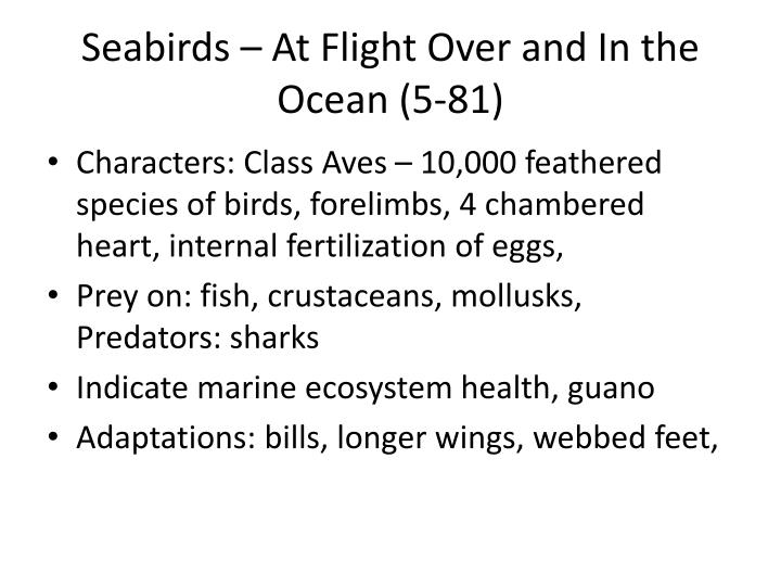 Seabirds – At Flight Over and In the Ocean (5-81)