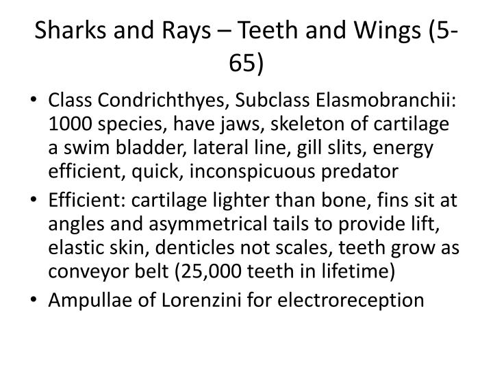 Sharks and Rays – Teeth and Wings (5-65)