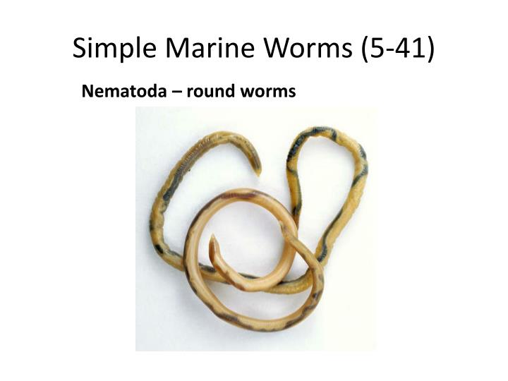 Simple Marine Worms (5-41)