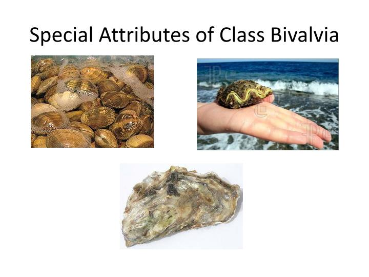 Special Attributes of Class