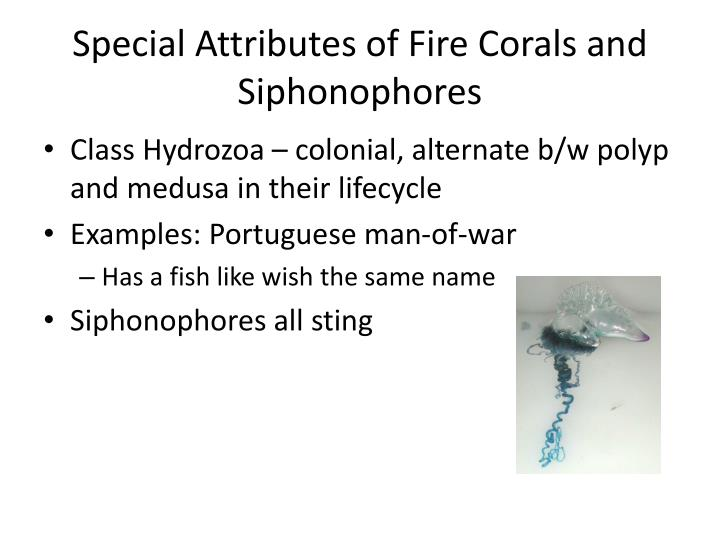 Special Attributes of Fire Corals and