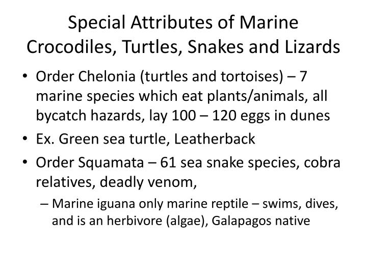 Special Attributes of Marine Crocodiles, Turtles, Snakes and Lizards