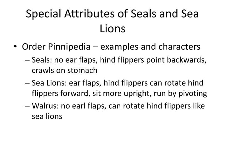 Special Attributes of Seals and Sea Lions