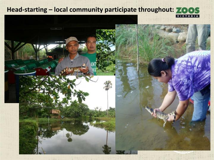 Head-starting – local community participate throughout:
