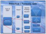 petechial purpuric rash1
