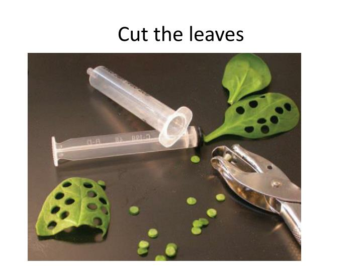 Cut the leaves