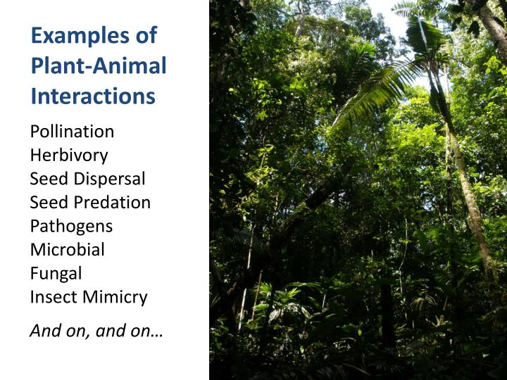importance of plant animal interactions in rainforests biology essay Read this full essay on medicinal uses of rainforest plants it is estimated that nearly half of the world's estimated 10 million species of plants, animals, and micro-organisms will be rainforest plants are complex chemical storehouses that contain many undiscovered compounds which are a.