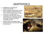 adaptation 31