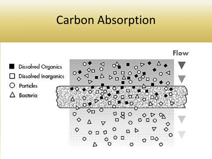 Carbon Absorption