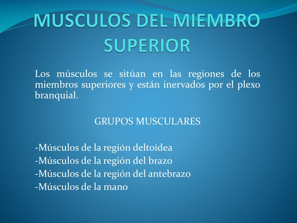 PPT - MUSCULOS DEL MIEMBRO SUPERIOR PowerPoint Presentation - ID:1857079