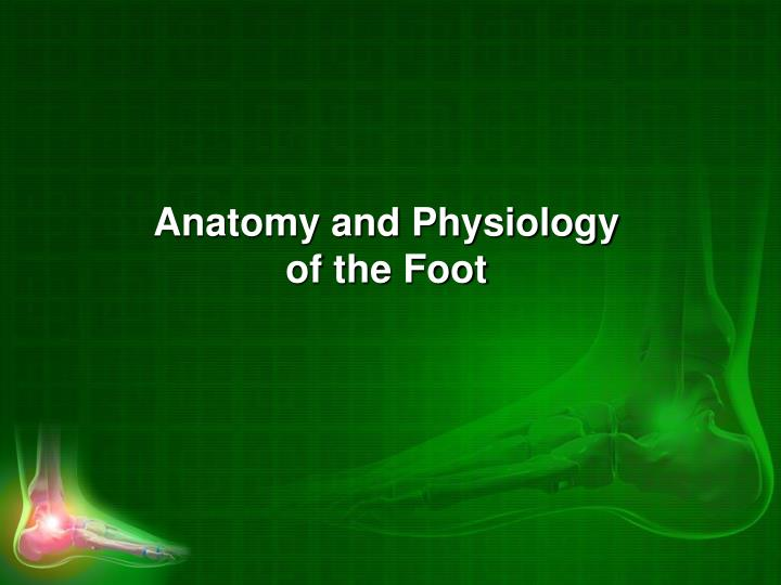 Anatomy and Physiology of the Foot