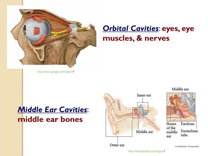 Orbital Cavities