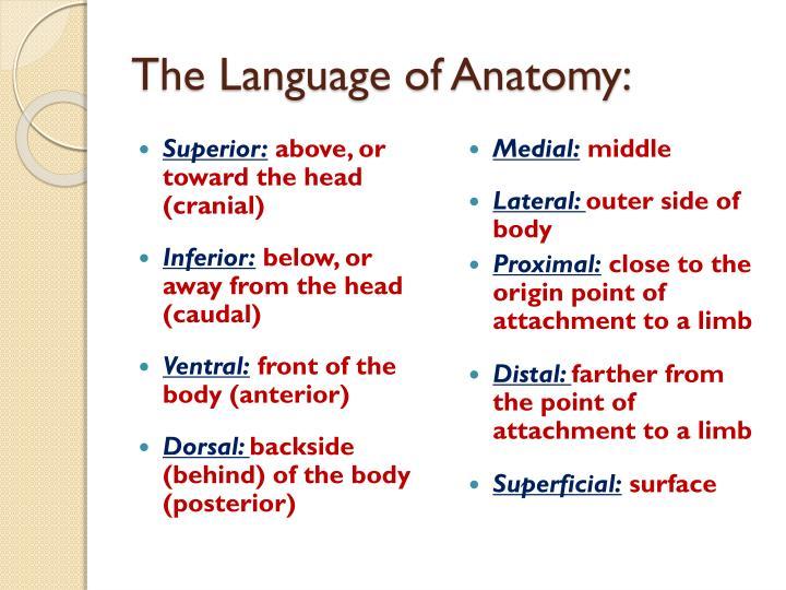 The Language of Anatomy: