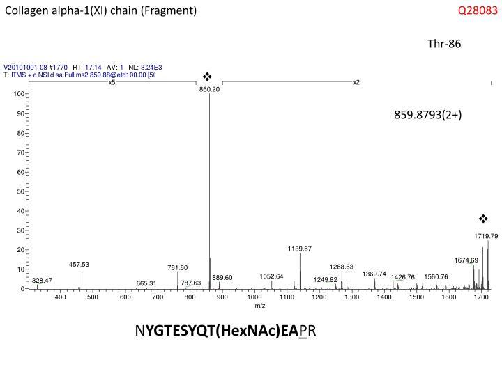 Collagen alpha-1(XI) chain (Fragment)
