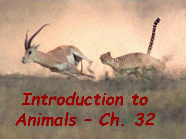 introduction to animals n.