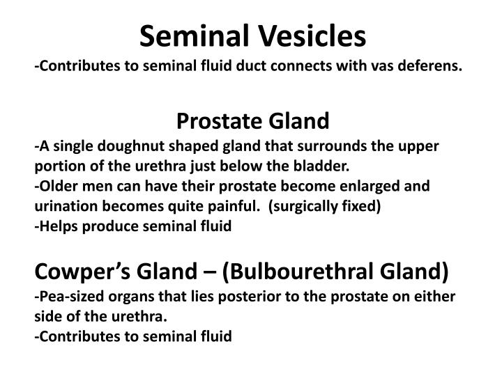 Ppt Structure And Function Of Male Reproductive System Powerpoint