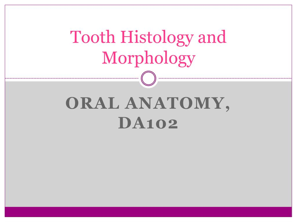 Ppt Tooth Histology And Morphology Powerpoint Presentation Id