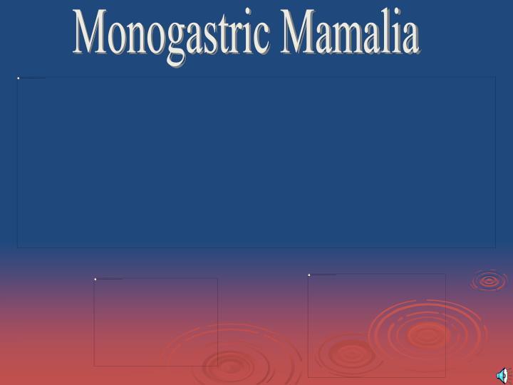 Monogastric Mamalia