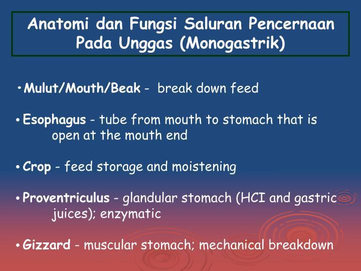 Anatomi dan Fungsi Saluran Pencernaan Pada Unggas (Monogastrik)