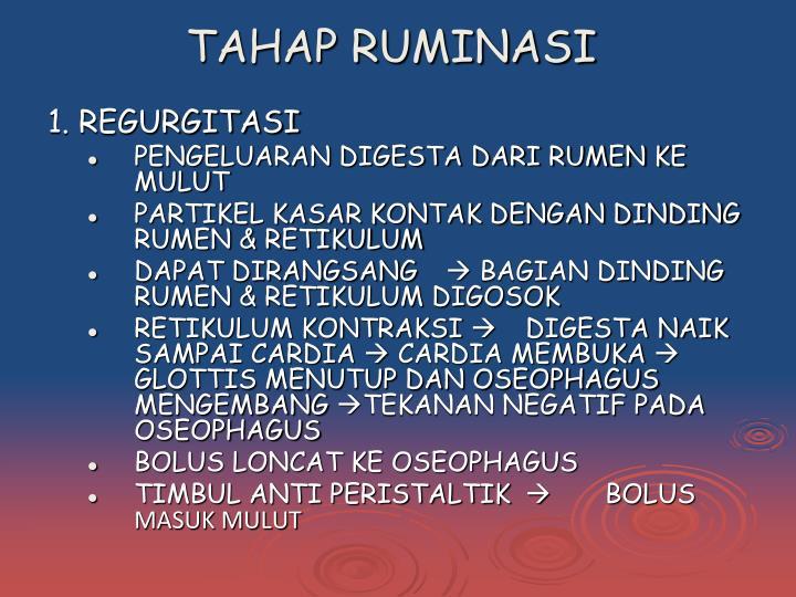 TAHAP RUMINASI
