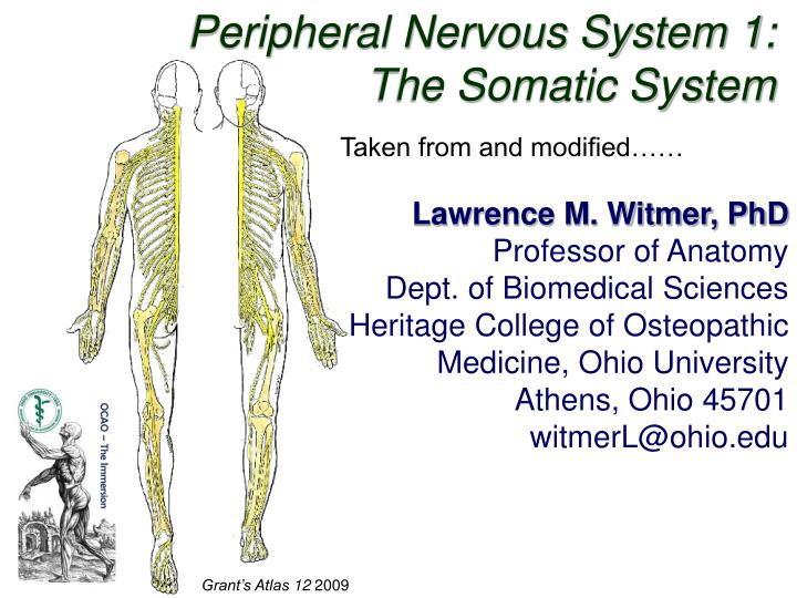 PPT - Peripheral Nervous System 1: The Somatic System