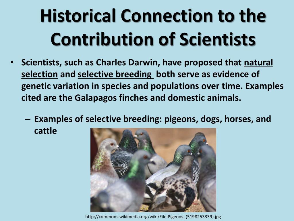 PPT - Selective Breeding PowerPoint Presentation - ID:1863291