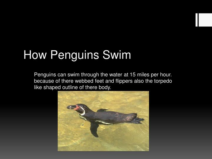 How Penguins Swim