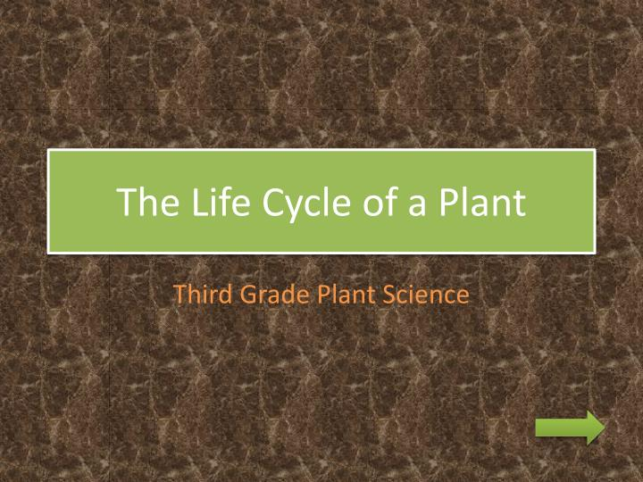 the life cycle of a plant n.