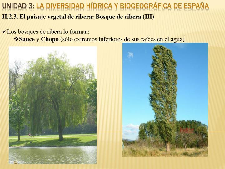 II.2.3. El paisaje vegetal de ribera: Bosque de ribera