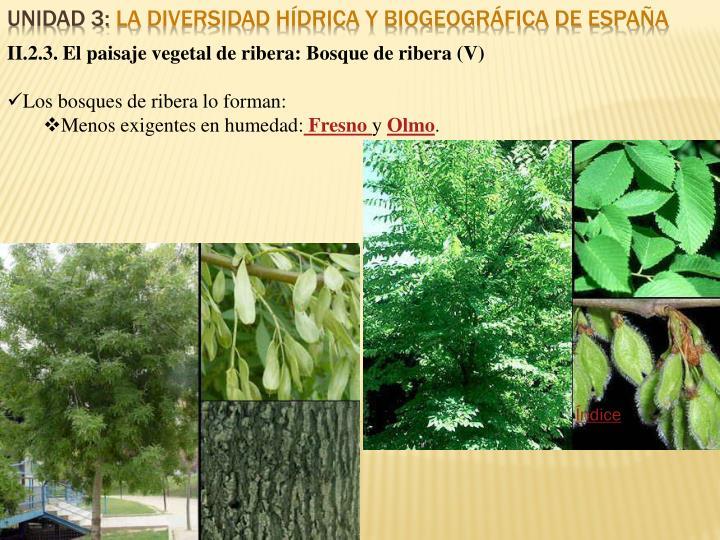 II.2.3. El paisaje vegetal de ribera: Bosque de ribera (V)