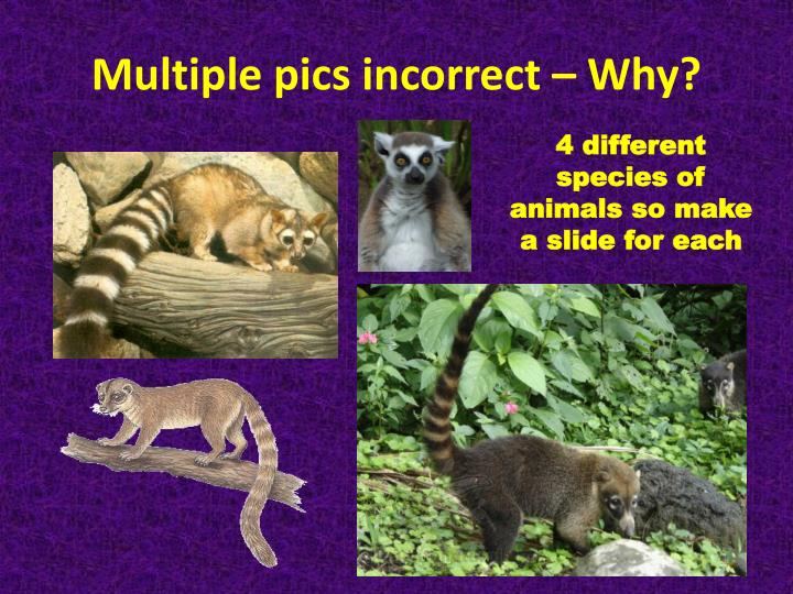 Multiple pics incorrect – Why?