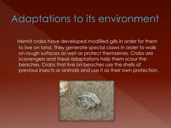 Adaptations to its environment