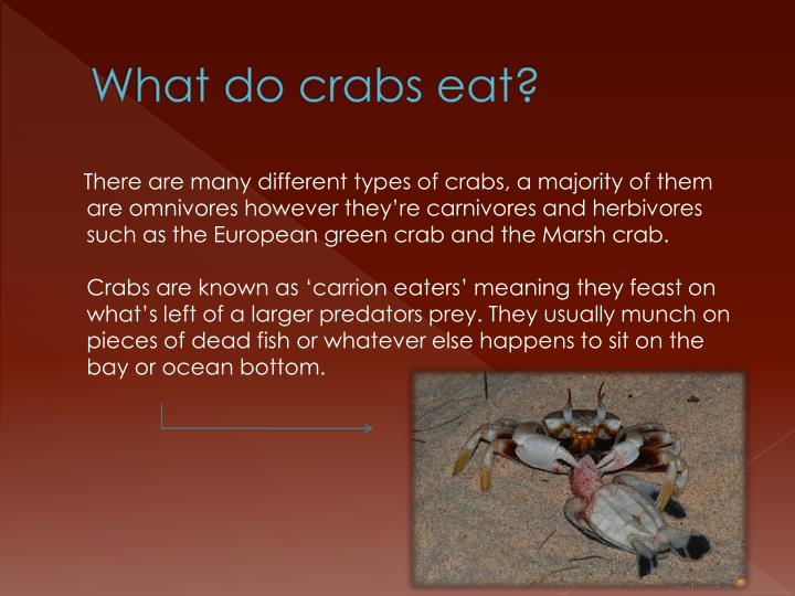 What do crabs eat