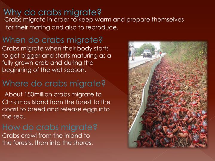 Why do crabs migrate?