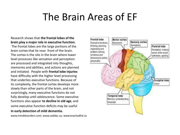 PPT - Executive Functioning Disorder PowerPoint ...