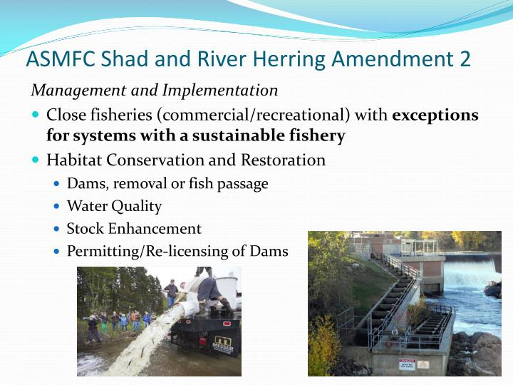 ASMFC Shad and River Herring Amendment 2
