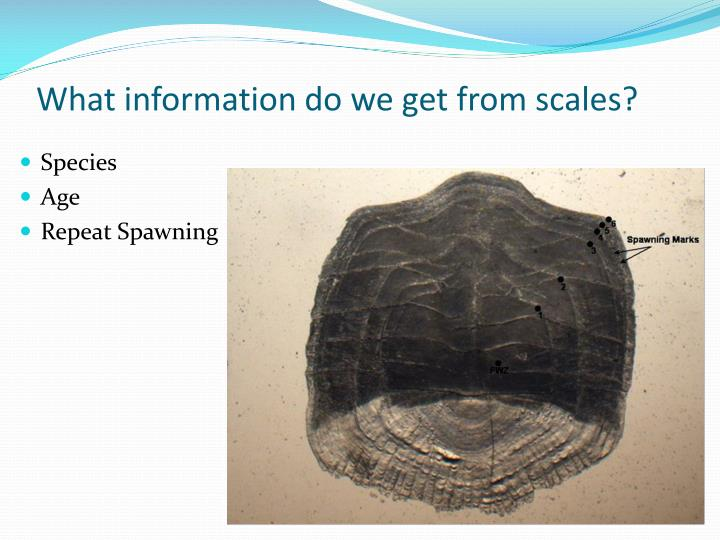 What information do we get from scales?