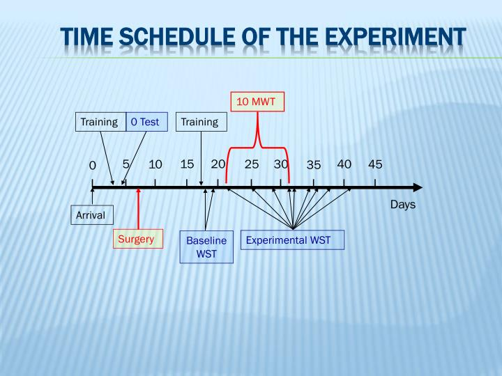 Time schedule of the experiment
