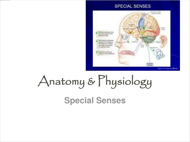 PPT - Anatomy & Physiology PowerPoint Presentation - ID:1867087