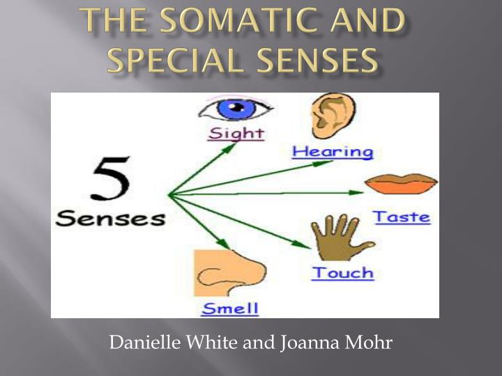 the somatic and special senses n.
